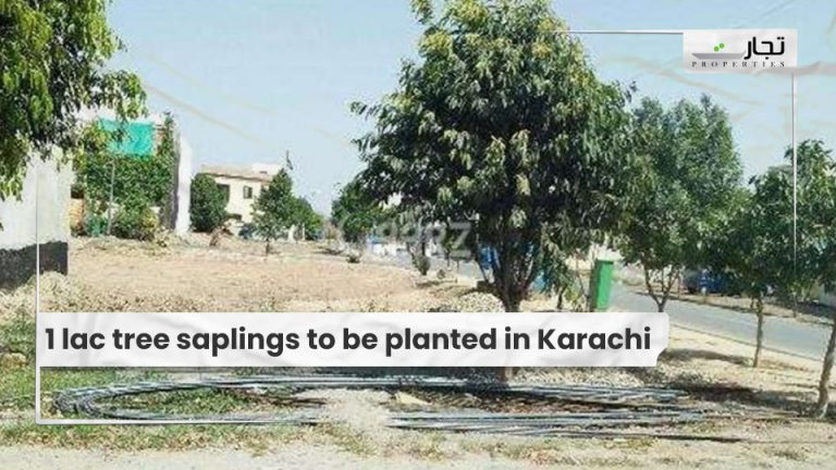 1 lac tree saplings to be planted in Karachi