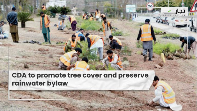 CDA-to-promote-tree-cover-and-preserve-rainwater-bylaw