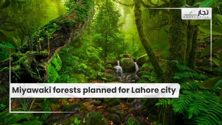 Miyawaki-forests-planned-for-Lahore-city-