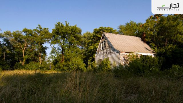 photos showing how nature is reclaiming Detroit