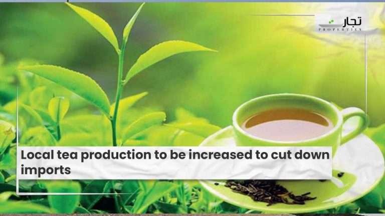 Local-tea-production